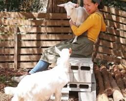 熱塩温泉「ふじや」の山羊